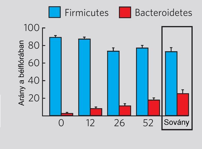 a baktériumok elszaporodása okoz-e fogyást